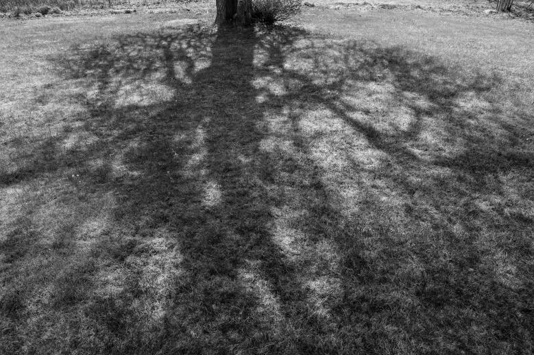 Päronträdets skugga